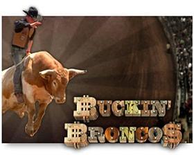 Saucify Buckin Broncos