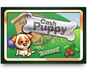 Saucify Cash Puppy