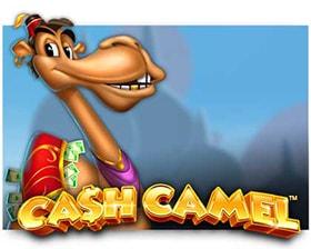 iSoftBet Cash Camel