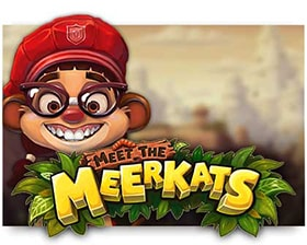 Push Gaming Meet the Meerkats Flash