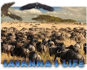 EGT Savanna's Life