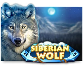 Red Rake Gaming Siberian Wolf