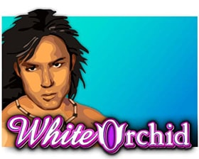 IGT White Orchid