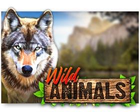 Red Rake Gaming Wild Animals