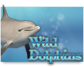 Oryx Wild Dolphins